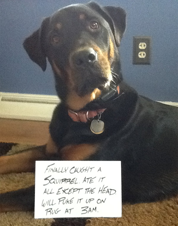 It's not dog shaming when they're proud of themselves.